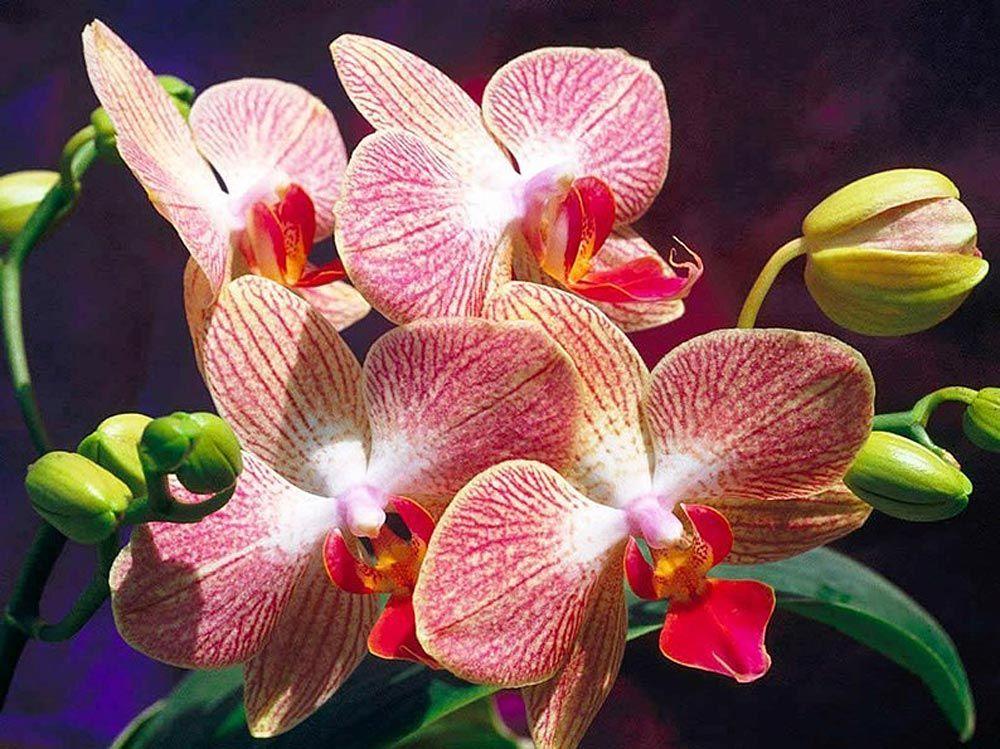 Зайчик, картинки с орхидеей на рабочий стол